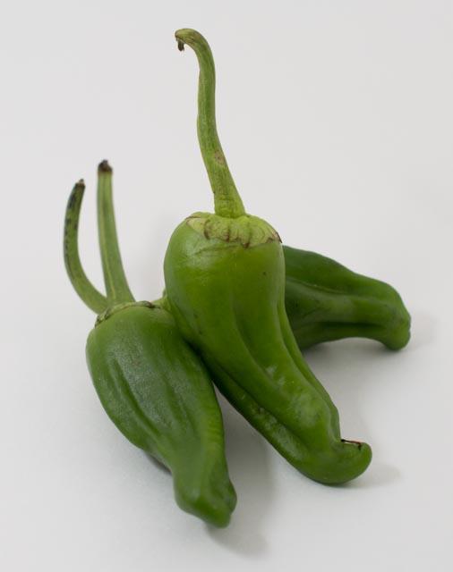 padron.chile
